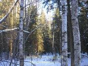 Участок, Киевское ш, 60 км от МКАД, Любаново. Лесной участок 5 . - Фото 3