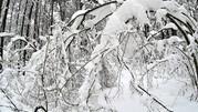 Квартира с панорамными окнами и видом на лес Рублевское шоссе, Купить квартиру в новостройке от застройщика Усово, Одинцовский район, ID объекта - 325145417 - Фото 7