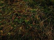 Участок 15 га в пос. Красное-на-Волге (Костромская обл.), Земельные участки Красное-на-Волге, Красносельский район, ID объекта - 201538668 - Фото 7