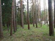 Продается участок 42 сотки в Жуковке, недалеко от реки. Бывшие дачи .