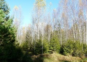 Участок 9,5 соток с молодым лесом, ПМЖ, эл-во 15 квт, дер. Таширово. - Фото 5