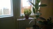 Предлагаем однокомнатную квартиру по пр.Коммунистическому 24 - Фото 2