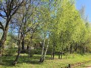 Лесной участок 10 соток под Звенигородом - Фото 5
