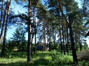 Полность сосновый участок в жилом поселке на Ильинском - Новорижском ш - Фото 2