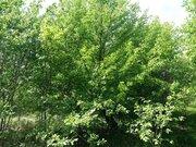 Продам земельный участок в с. Ковардицы - Фото 3