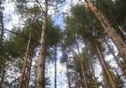 Участок 20 соток с лесными деревьями в Кратово - Фото 2