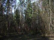 Продажа выгодно , лесного участка на Рублевке, д.Жуковка - Фото 4