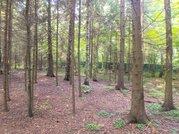 Продаю участок 30 соток в лесу, Дмитровское шоссе - Фото 5