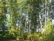 Участок 61 сот. с лесными деревьями 12 км. от МКАД п. Клязьма - Фото 5