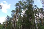 Великолетный сосновый участок в элитном поселке - Фото 1