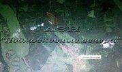 Щелковское ш. 100 км от МКАД, Никифорово, Участок 650 сот. - Фото 4