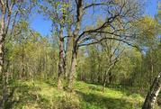 Лесной участок 10 соток под Звенигородом - Фото 2