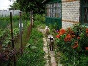 Дом у реки и леса в деревне Коровино Калужской области - Фото 2