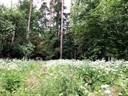 Лесной участок 25 соток на Ярославском шоссе