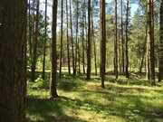 Лесной участо 6 соток дер. Устиновка ИЖС