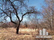 Участок 16,5 сот г/п Дмитров, д. Настасьино - Фото 2
