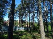 Полность сосновый участок в жилом поселке на Ильинском - Новорижском ш