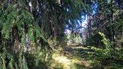 Шикарный земельный участок на опушке леса под строительство - Фото 3