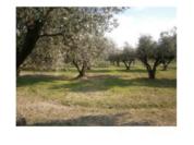 Продается земельный участок в Селлия Марина