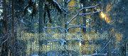 66 000 €, Дом, Ярославское ш, 11 км от МКАД, Загорянский пос. 11 км Ярославское ., Аренда домов и коттеджей Загорянский, Щелковский район, ID объекта - 502206096 - Фото 35
