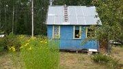 Участок в сосновом лесу с небольшим домиком 50 км от МКАД - Фото 1
