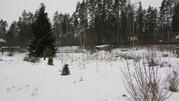 Земельный участок в окружении соснового бора - Фото 2