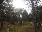 Участок 5 соток в Севастополе у соснового леса- мечта для жизни! - Фото 3