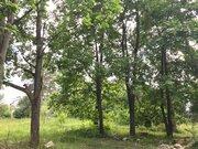 Участок 6 сот с вековыми соснами в Расторгуево с коммуникациями - Фото 4