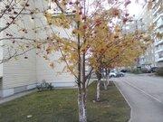 Павловский тракт 267, Купить квартиру в Барнауле по недорогой цене, ID объекта - 322564486 - Фото 17