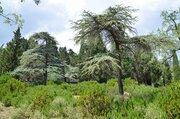 Продается земельный участок в Алупке 300м от моря - Фото 2