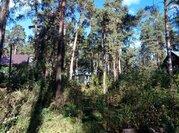 Сосновый участок в стародачном поселке Барвихе Новь - Фото 2