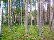 Залесная 19 (Шордор-2) - Фото 2