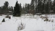 Земельный участок в окружении соснового бора - Фото 4